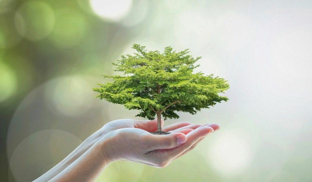 Wir gestalten Nachhaltigkeit und du kannst mitwirken